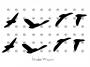 bb zugvögel